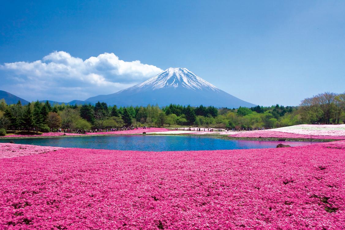芝桜画像2010年版